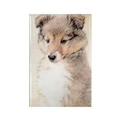 Shetland Sheepdog Puppy Rectangle Magnet (10 pack)