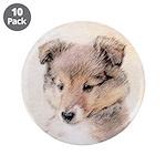 Shetland Sheepdog Puppy 3.5