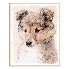 Shetland Sheepdog Puppy Posters