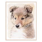 Shetland Sheepdog Puppy Small Poster