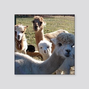 "ALPACA FAMILY PORTRAIT III Square Sticker 3"" x 3"""