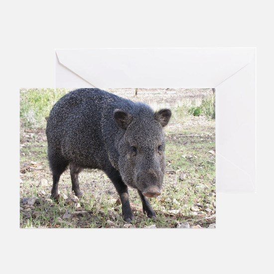 Javelina Greeting Card