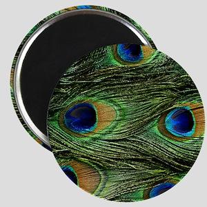 peacock wallet Magnet