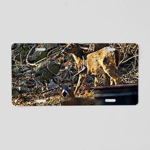 Fall Deer 1 Aluminum License Plate