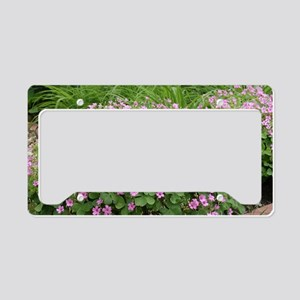 Lovely Pink Oxalis flowers License Plate Holder