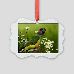 chiwi Picture Ornament
