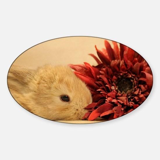 Baby Bunny Calendar Cover Sticker (Oval)