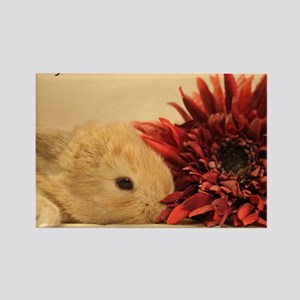 Baby Bunny Calendar Cover Rectangle Magnet