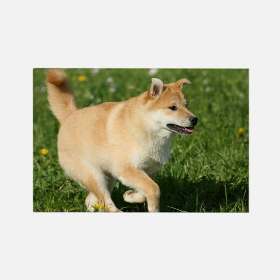 shiba_pc2 Rectangle Magnet