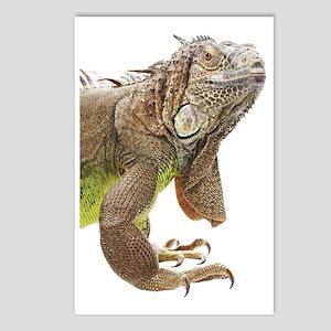 Iguana_logo_XLarge_trimme Postcards (Package of 8)