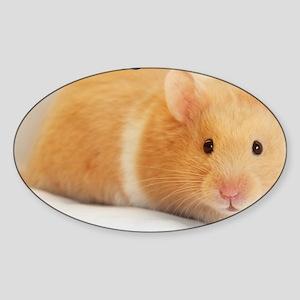 Hamster calendar cover Sticker (Oval)