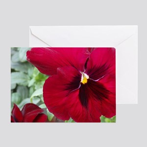 Perfect Red Pansy flower Greeting Card