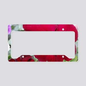 Perfect Red Pansy flower License Plate Holder