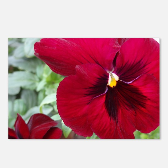 Perfect Red Pansy flower Postcards (Package of 8)