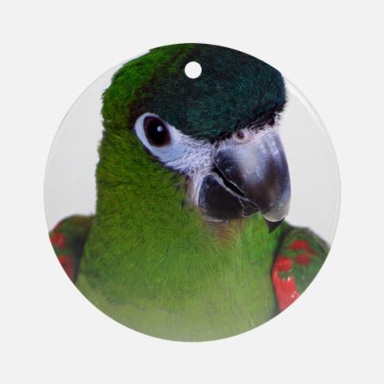 Hahns Macaw Round Ornament