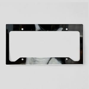 DSC_0008 License Plate Holder