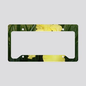 Yellow Bearded Iris License Plate Holder