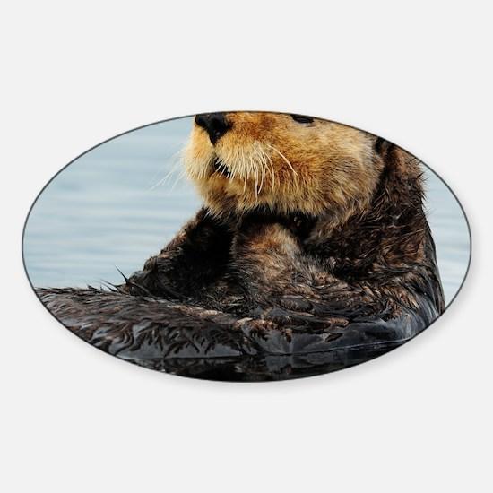 115x9_calender_otter_11 Sticker (Oval)