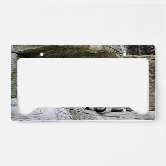 Lemurs License Plate Holder