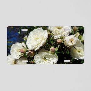 White Roses in Blue Sky Aluminum License Plate