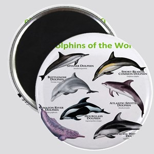 Dolphins of the World Magnet