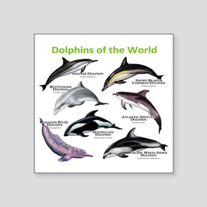 "Dolphins of the World Square Sticker 3"" x 3"""