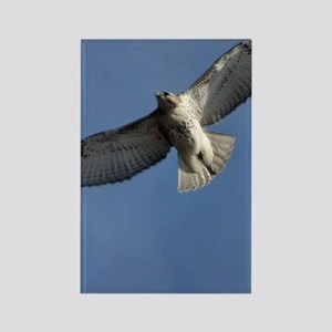 Juv Redtail Tile Rectangle Magnet
