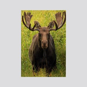Moose in velvet Rectangle Magnet