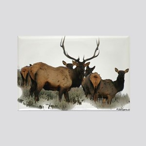 Bull elk Rectangle Magnet