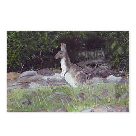 kangaroo Postcards (Package of 8)