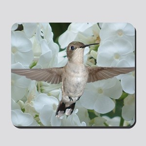 Hummer on Phlox Mousepad