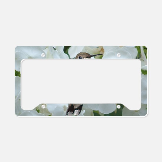 Hummer on Phlox License Plate Holder