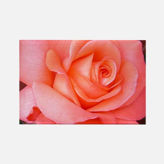 AFP 015a Rose coral clsup Rectangle Magnet