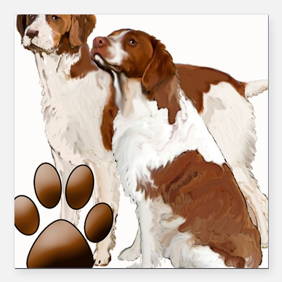 """brittany spaniels2 Square Car Magnet 3"""" x 3"""""""