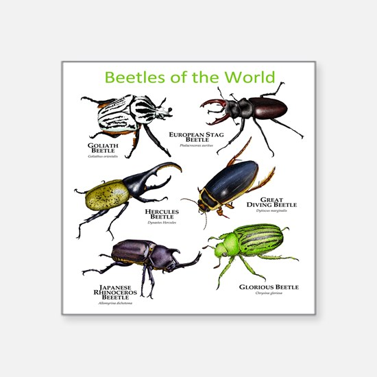 "Beetles of the World Square Sticker 3"" x 3"""