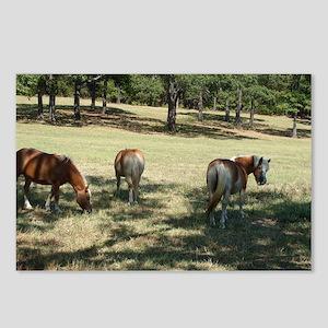 Haflinger horses grazing Postcards (Package of 8)