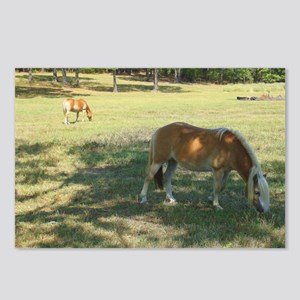 Haflingers Grazing Postcards (Package of 8)
