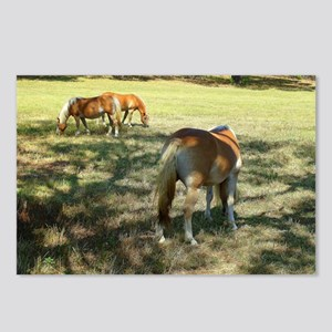 Haflinger Rear View! Postcards (Package of 8)