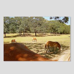 Haflinger Curves! Postcards (Package of 8)