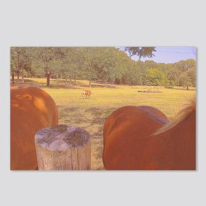 Haflinger Hind View! Postcards (Package of 8)