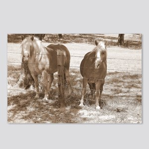 Haflingers in Black and W Postcards (Package of 8)