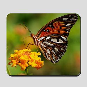 Gulf_Fritillary_Butterfly_Agraulis_vanil Mousepad