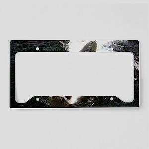 guardfish rectangle magnet License Plate Holder