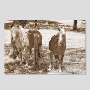 Haflinger Black  White Postcards (Package of 8)