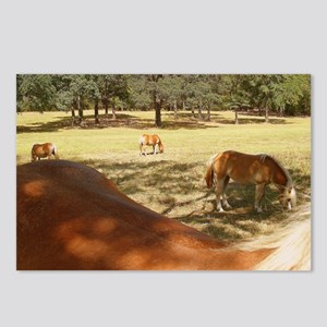 What A View! Postcards (Package of 8)