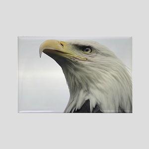 Selous Eagle2 Rectangle Magnet