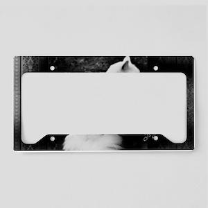 Il Gatto Bello License Plate Holder