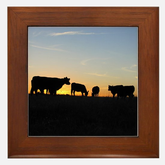 Cows at sundown Framed Tile
