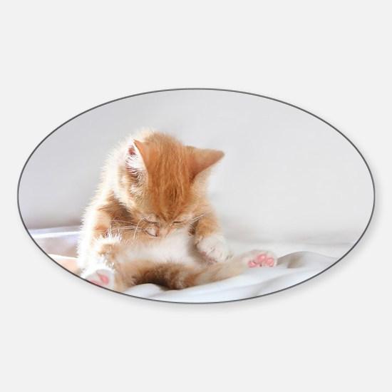 Sleepy Kitty Decal