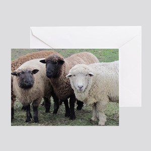 3 Sheep at Wachusett Greeting Card